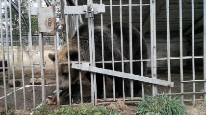 ВПрикамье готовы отдать медведя в отличные руки