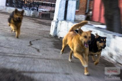 ВШадринске утвердили новые правила отлова бездомных собак